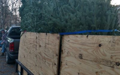 Christmas Tree Sale Proceeds To Go Toward Debt Retirement