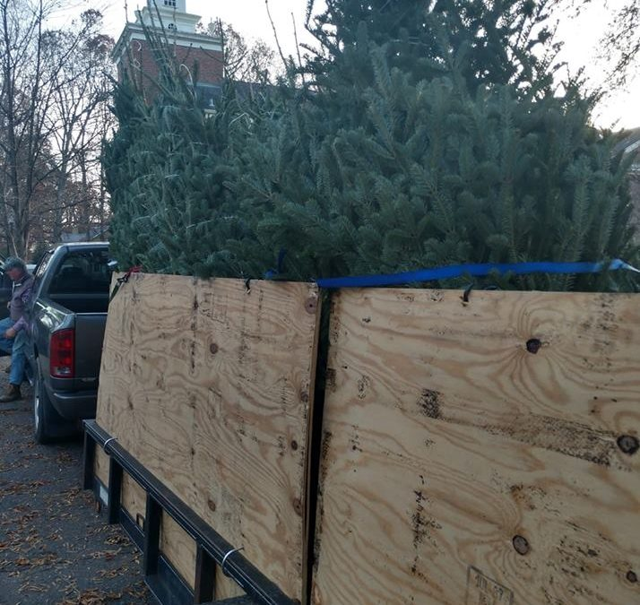 Christmas Tree Sale Proceeds To Go Toward Debt Retirement